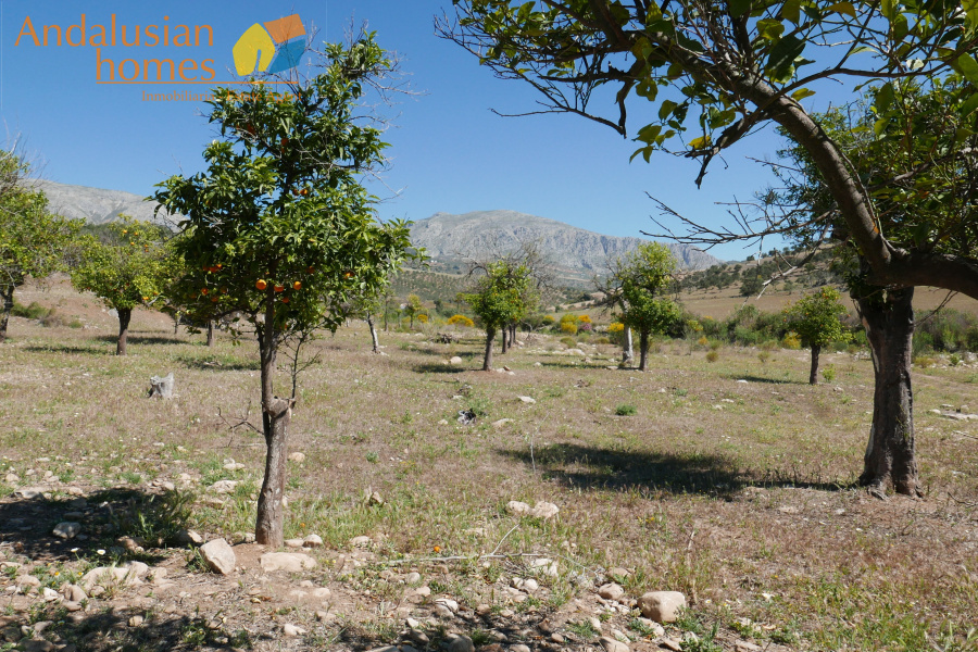Fincas/Country Houses,For sale,1498